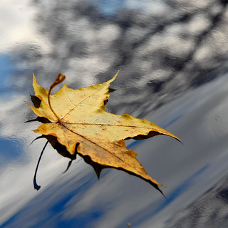 another leaf.