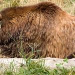 Woodland Park Zoo Seattle 095
