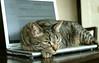 Cat&laptop