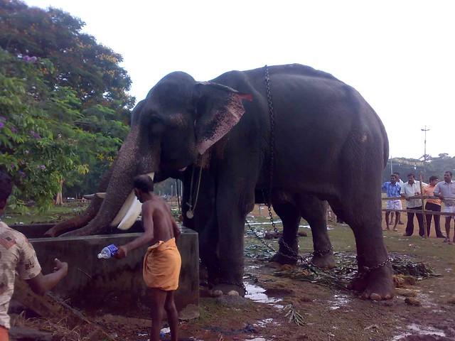 Mallu Kuli Seen Video