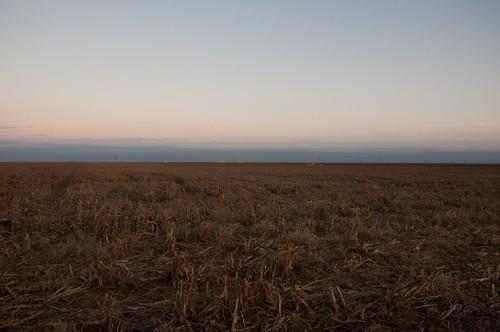 field nikon pheasant farming hunting kansas copeland d90 sublette