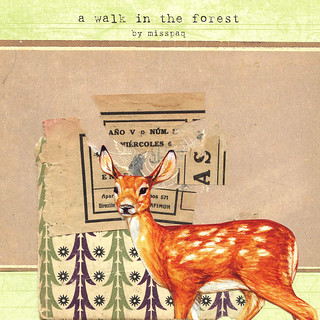 a walk in the forest cover