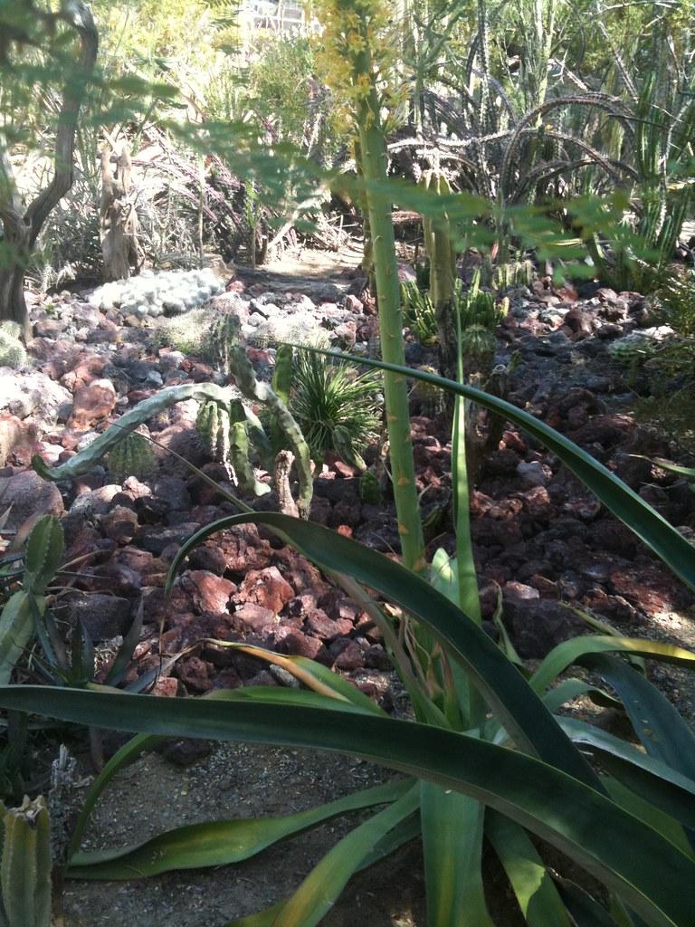Moorten Botanical Garden Palm Springs Tripomatic