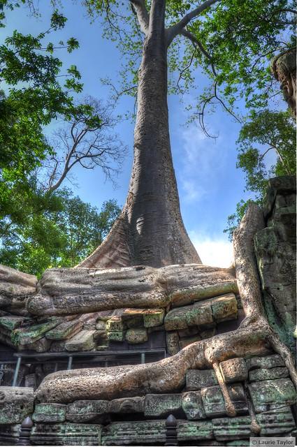 Tree vs Temple