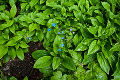 vegetable(0.0), malabar spinach(0.0), produce(0.0), food(0.0), annual plant(1.0), flower(1.0), leaf(1.0), plant(1.0), herb(1.0), basil(1.0),
