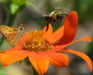 buzz off ...