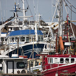 Fishing Fleet - Howth