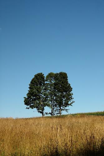 beauty field corn vermont grain bluesky vt threetrees randolphcenter canon40d