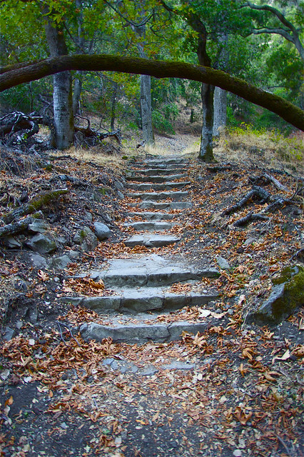 Forgotten Steps - San Jose, California, USA