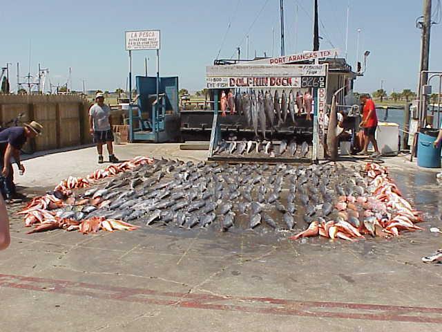 Port aransas fishing trip 2002 flickr photo sharing for Port aransas fish cam
