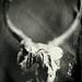 tintype by akkleis