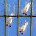 Gulls On The Glasshouse Roof by John Penberthy LRPS