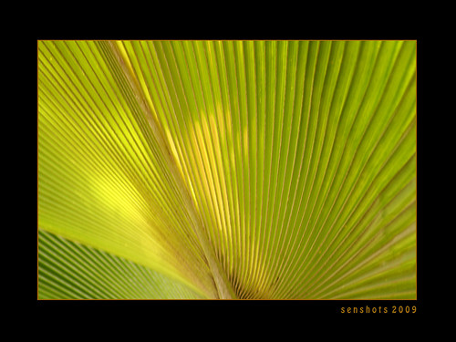 white green texture nature beautiful leaves canon design pattern view angle greenery panama lovely 2009 naturally canonphotography sigma70300f456dgmacro canoneos1000d canoneosdigitalrebelxs senshots armsenthil senthilmani senshotsphotography