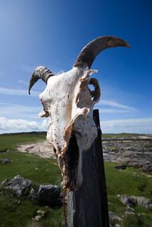 Ram's Skull, Tiree