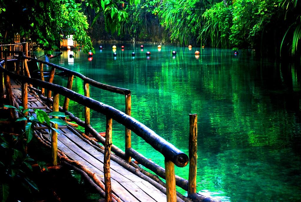 A Jungle Venice