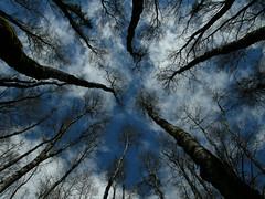 Puro bosque
