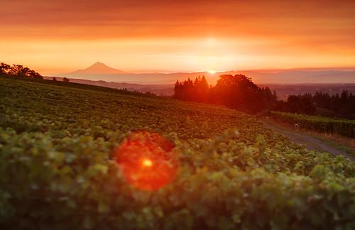 trees sky sun sunrise canon eos vineyard vines wine vine winery rows grapes rise hdr highdynamicrange stoller 40d