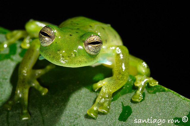 Frogs - Nature Haven