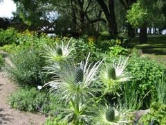 Hatanpää Arboretum