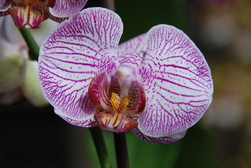 Orchideenzucht von Schatty