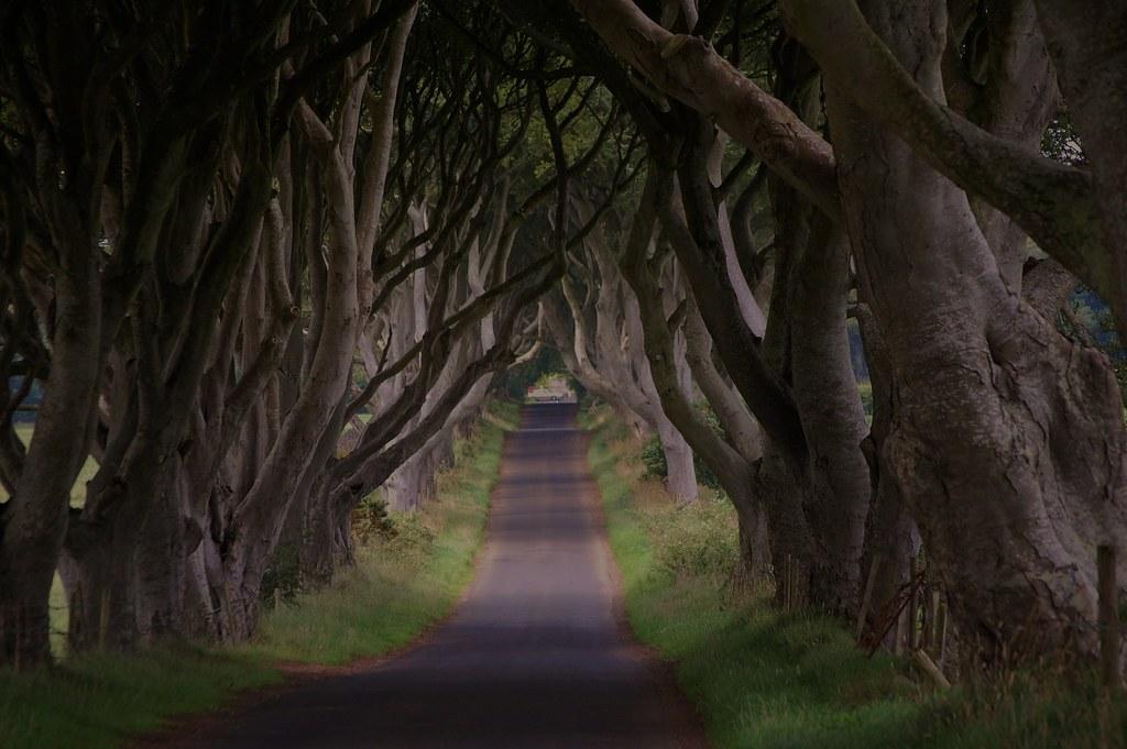 [精选] 爱尔兰神秘古道 童话般黑暗树篱 - 路人@行者