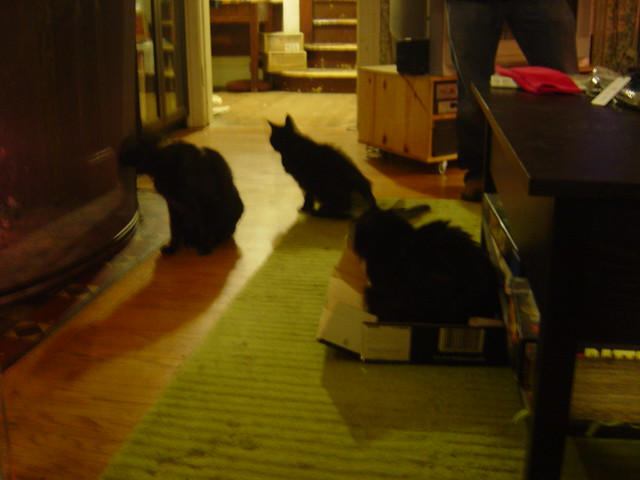 Cats, including Domino in a Strongbow box