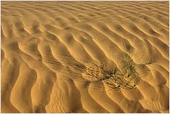 gold, thar desert
