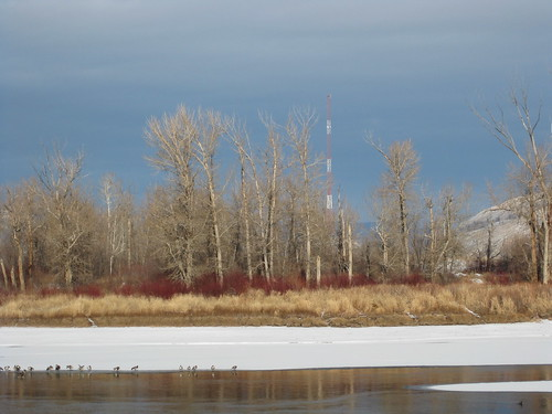 winter canada ice birds river alberta kamloops