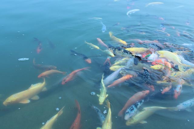 壁纸 动物 海底 海底世界 海洋馆 水族馆 鱼 鱼类 500_333图片