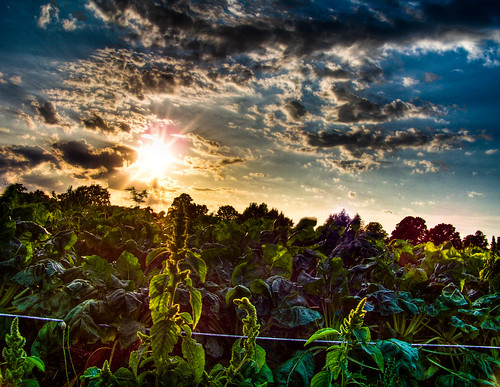 Vegetable Sunset