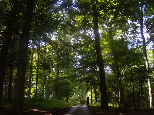Tall trees, Cosgrove Woods