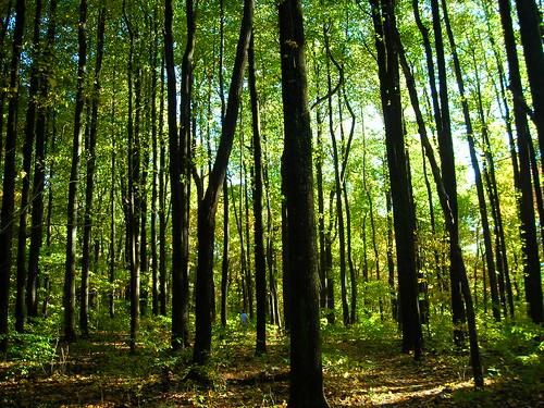 woods platinumheartaward flipmode79