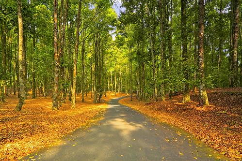 autumn bali green nature pine forest garden indonesia landscape colours scene efs1022mm bedugul outdoorphotography canoneos50d bedugulbotanicalgarden bwcpl tropicaliving kebunrayaekakarya rawproccessedwithdigitalphotopro tiffproccessedwithadobephotoshopcs3 wouldyouliketotakeawalkwithme