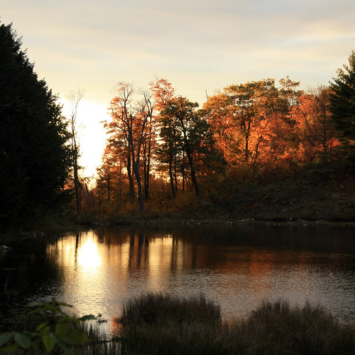 park trees sunset pond colours gatineau gatineaupark