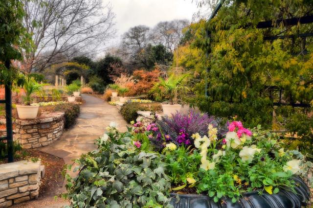 Fwbg Fort Worth Texas Botanic Garden Tree Winter Arbor