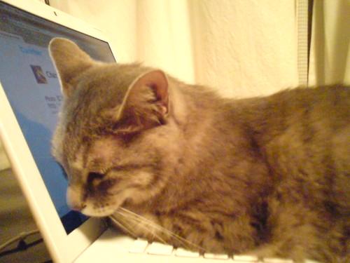 Sleep on a MacBook