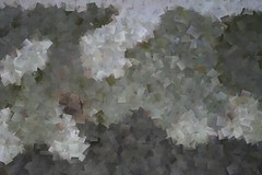 Platane bark