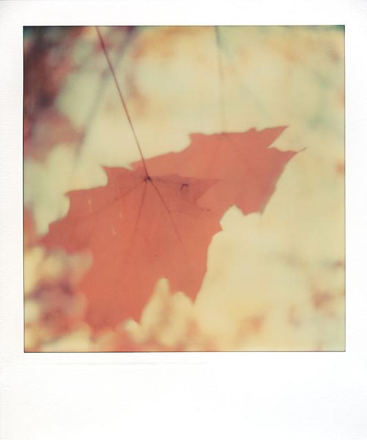 Fall Roid 004