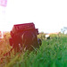 grass image, photo or clip art