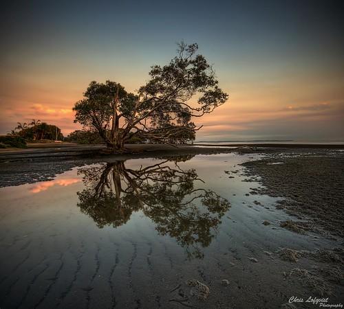 reflection tree sunrise ripples hdr sigma1020 nudgeebeach mywinners canon400d theperfectphotographer vertorama saariysqualitypictures imagicland
