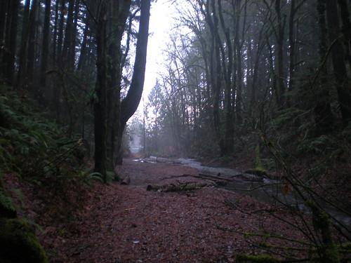 christmas nature misty fog creek moss scenic trails rainy fungus nordic bigfoot sasquatch trailblazing coldanddamp winterinthenorthwest olympicpenraincountry