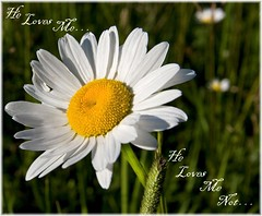 ~ He Loves Me... He Loves Me Not ~