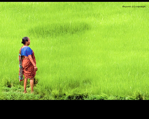 life travel india green relax rice paddy rags candid virgin monsoon karnataka journalism kundapur kundapura virginimeangreenlol