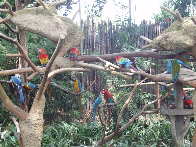 200907290941_Jurong-birdpark-macaws
