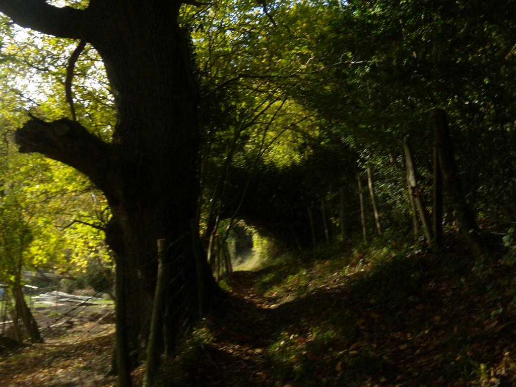 Past a big tree Sevenoaks Circular