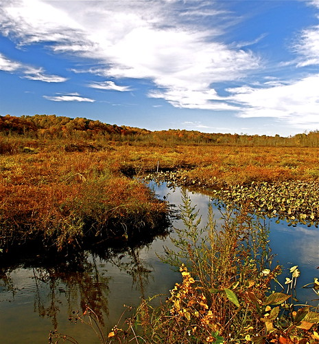 clouds reflections nikon fallcolors autumncolors pennsylvaniaavenue waterlillies creeks patuxentriver 1755 d300 southernmaryland marylandparks marshgrass uppermarlboromaryland anawesomeshot flickraward lothianmaryland annearundelcountymaryland marylandwetlands atomicaward marylandparksystem