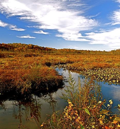 clouds reflections nikon fallcolors autumncolors pennsylvaniaavenue waterlillies creeks patuxentriver 1755 d300 southernmaryland marylandparks marshgrass uppermarlboromaryland anawesomeshot flickraward lothianmaryland annearundelcountymaryland marylandwetlands atomicaward marylandparksystem