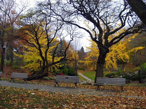 Ivan Forrest Gardens