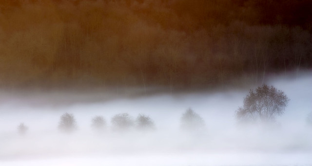 Sweeping Mist