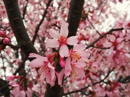 spring2014